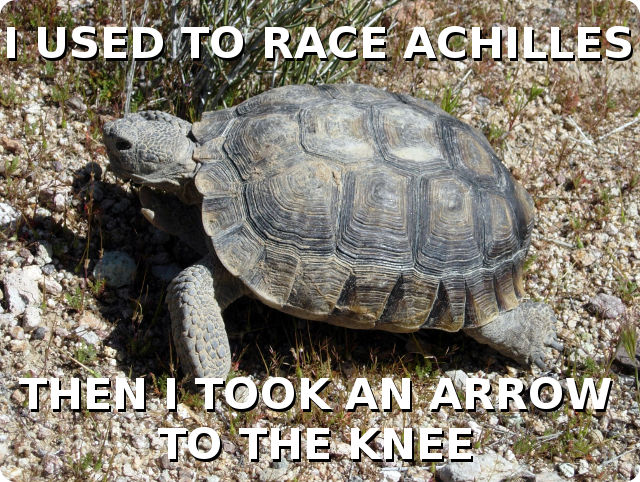 "A desert tortoise with the caption ""I used to race Achilles, then I took an arrow to the knee"""